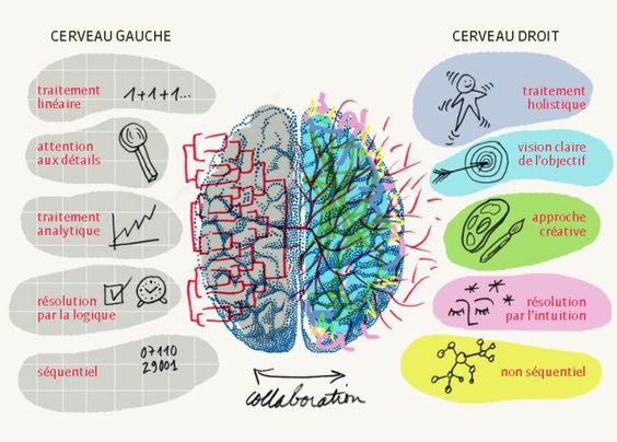 Hémisphères du cerveau